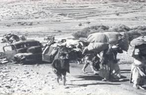 اللجوء الفلسطيني (النكبة)75