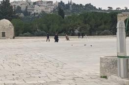 الاحتلال يأخذ قياسات وينفذ أعمال مسح في المسجد الأقصى وقبة الصخرة