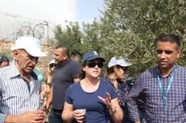 الأونروا تشارك أهالي بيت سوريك في قطف الزيتون