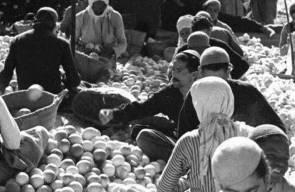اللجوء الفلسطيني (النكبة)71