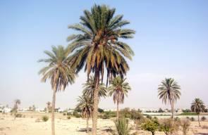 بلادي فلسطين ... مدينة اريحا الحديثة