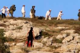 مستوطنون يجرفون أراضي ويدمرون 22 شجرة زيتون شرق قلقيلية