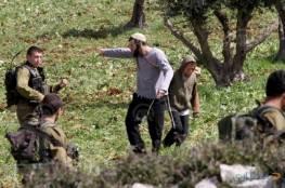 مستوطنون يسرقون أشجار زيتون جنوب بورين