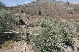الاحتلال يقطع نحو 200 شجرة زيتون في سلفيت ومستوطنون يحرقون العشرات في نابلس