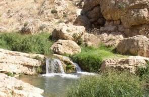 أريحا19 وادي القلط